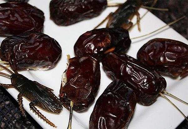 Тараканы из фиников